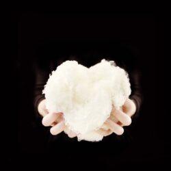 the heart of merino wool